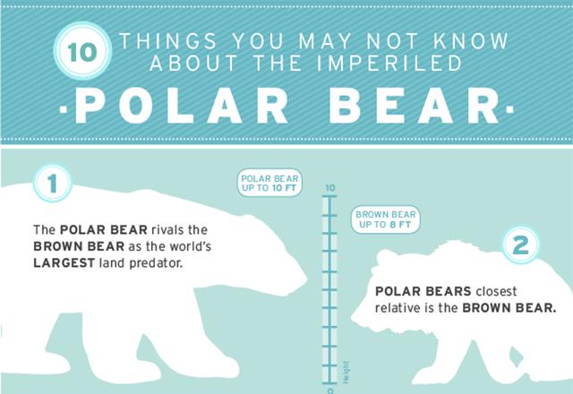 PolarBear-Thumb-640x440